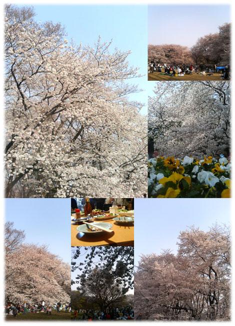 060401_sakura002.jpg