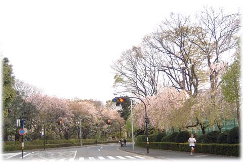 070418_shidaresakura.jpg
