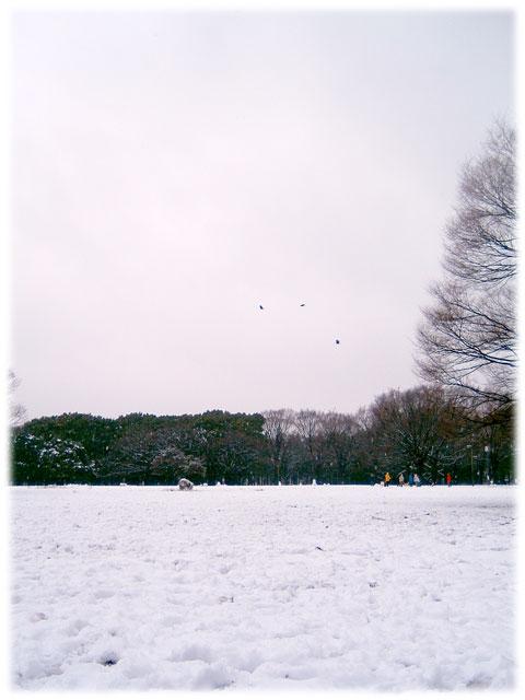 080203_snow_Yoyogipark02.jpg