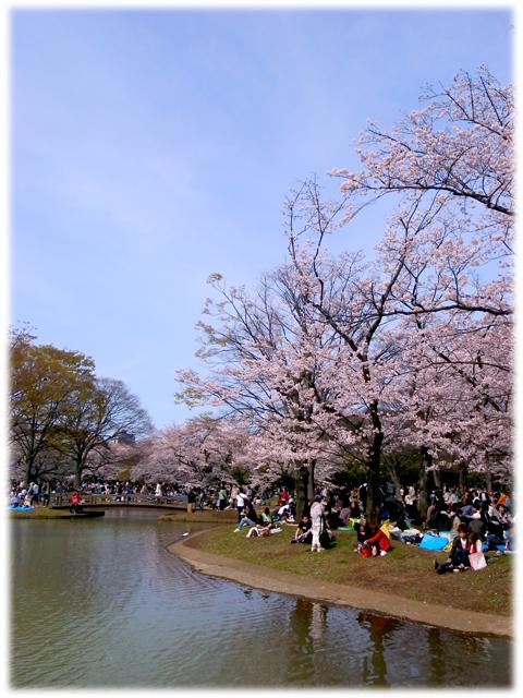 090411_Sakura.jpg