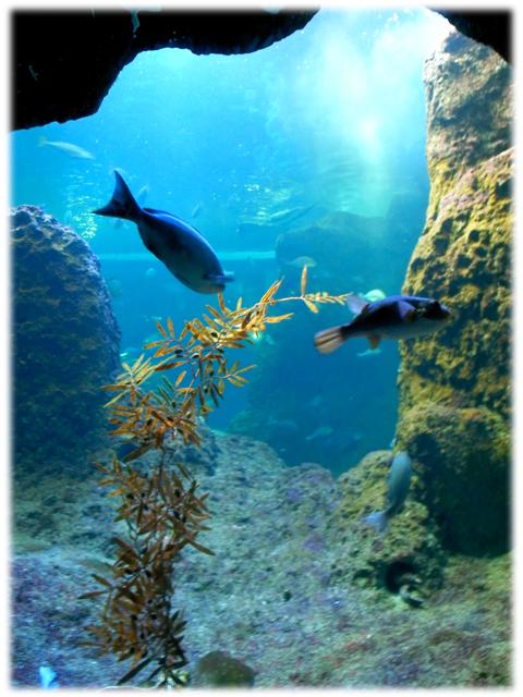 090517_Enoshima-aquarium-03.jpg