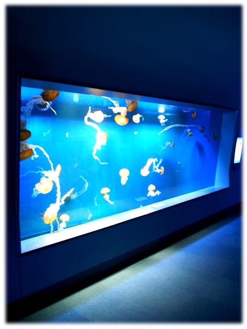 090517_Enoshima-aquarium-06.jpg