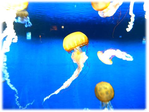 090517_Enoshima-aquarium-07.jpg