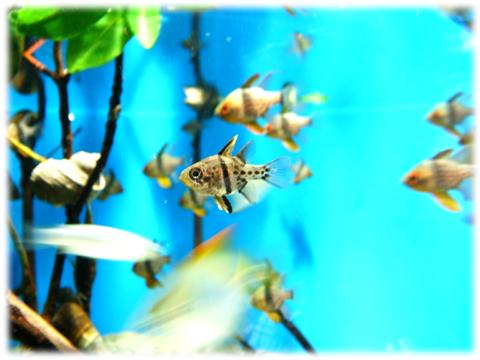 090517_Enoshima-aquarium-08.jpg