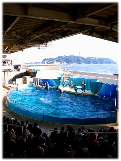 090517_Enoshima-aquarium-09.jpg