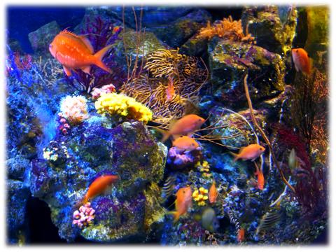 090517_Enoshima_aquarium-02.jpg