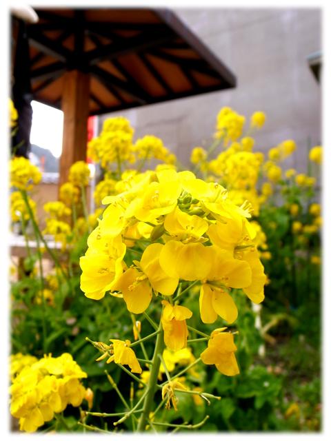 100515_Naoshima_Motomura-02.jpg