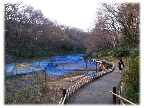 110320_Kiyomasai-05.jpg