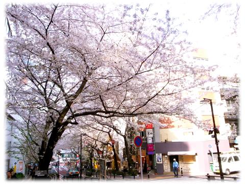 110410_Sakura-01.jpg
