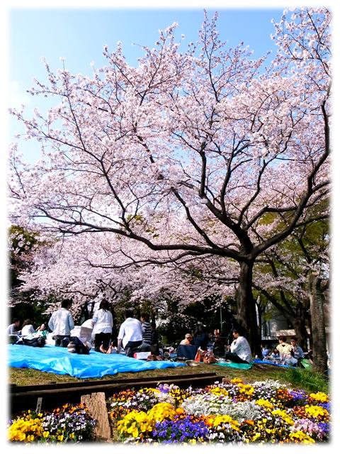 110410_Sakura-02.jpg