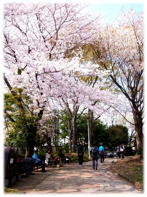 110410_Sakura-03.jpg
