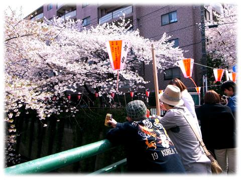 110410_Sakura-04.jpg