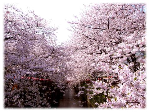 110410_Sakura-05.jpg