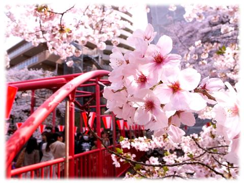 110410_Sakura-06.jpg