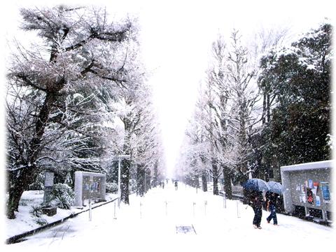 120301_Tokyo_Snowing.jpg
