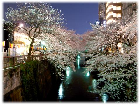 120409_Yozakura-01.jpg