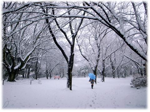 130116_Tokyo_Snowing-01.jpg