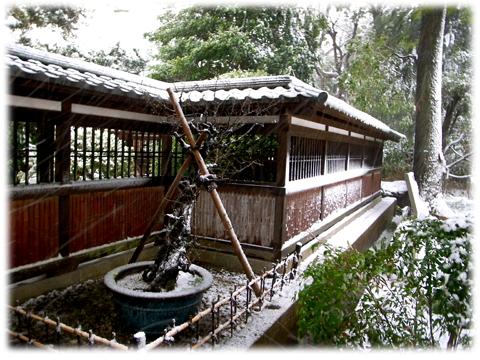 130116_Tokyo_Snowing-04.jpg