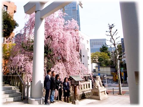 140401_Sakura_NogiJinjya-04.jpg